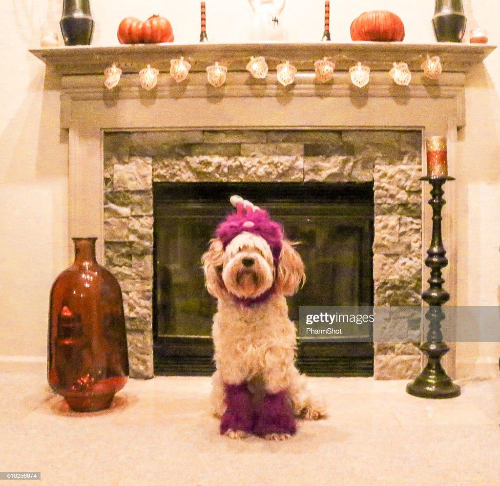 purple dog : Foto de stock