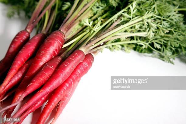 Violet Dragon carottes avec espace texte