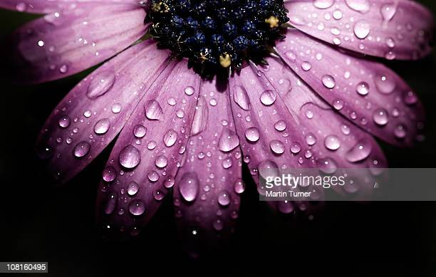 Purple flower, macro