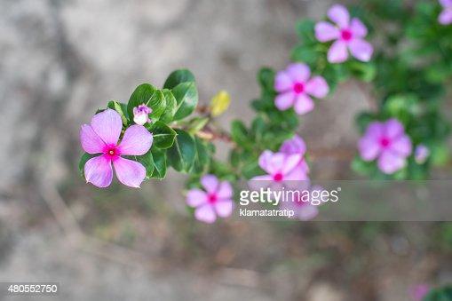 Purple Flower on the floor : Stock Photo
