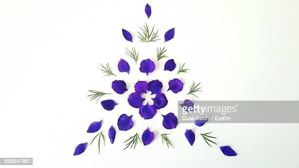 Purple Flower Petals Decorated Against White Background