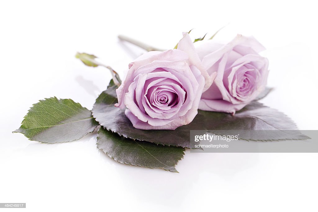 purple flower with green leaf : Stock Photo