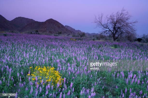 紫の花の牧草地での夕暮れ