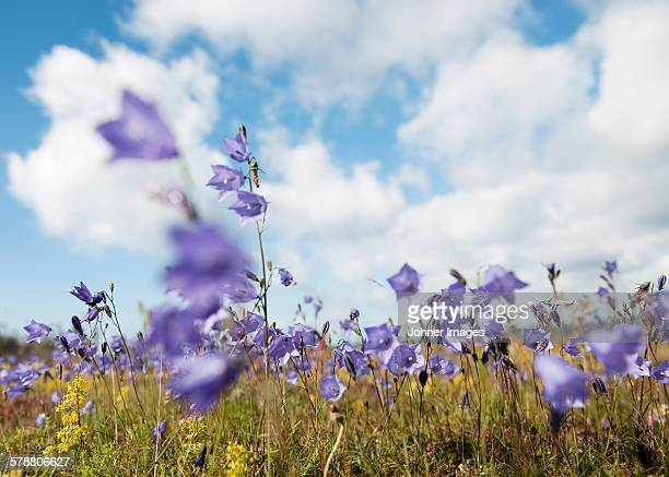 Purple flowers on meadow