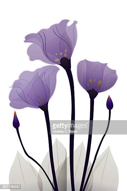 Purple Gentrian Flower