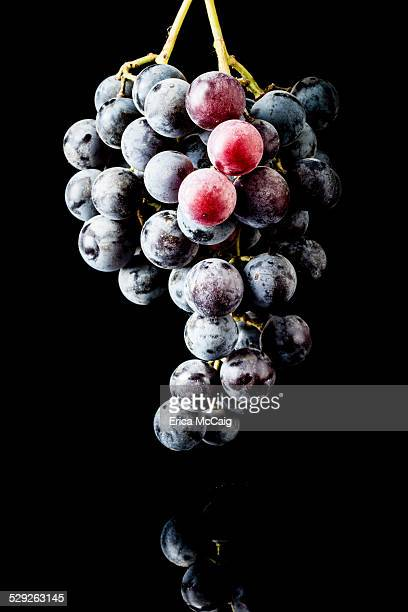 Purple Grapes isolated on black background