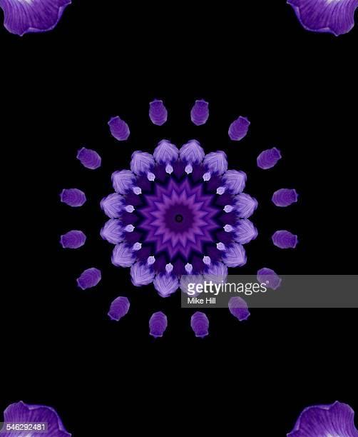 Purple iris mandala pattern