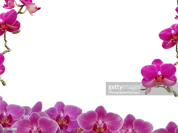 Purple orchid frame/ border
