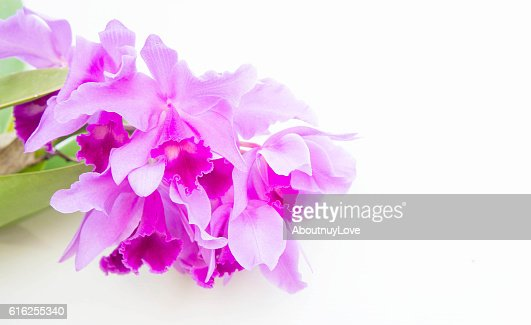 Purple orchids flower on white background and copy space : Foto de stock