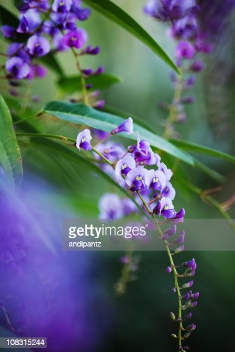 purple orchids : Stock Photo