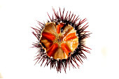 Purple sea urchin roe on a white background