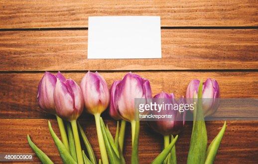 purple spring tulip with greeting card : Stock Photo