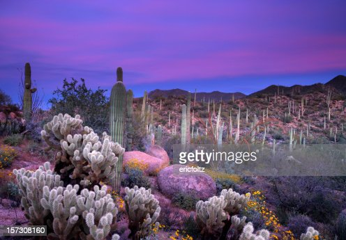 Coucher de soleil à Saguaro