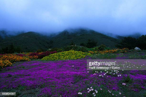 Purple Wildflowers At Foot Of Misty Mountain