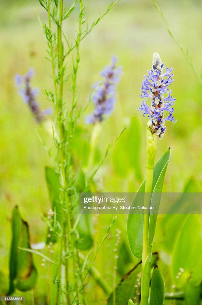 Purple Wildflowers : Stock Photo
