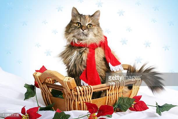 Purrfect Noël