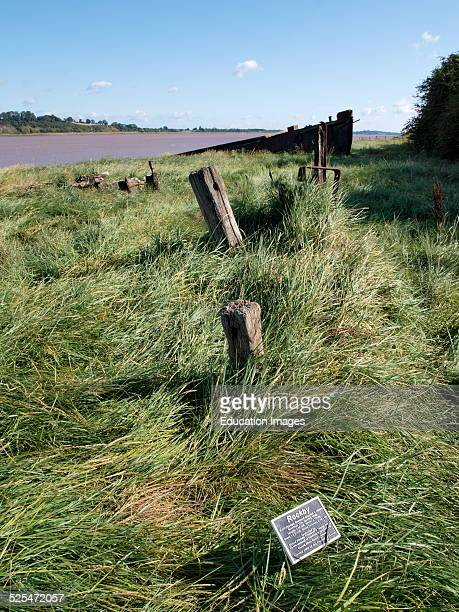 Purton ships graveyard Unwanted vessels beached on the banks of the River Seven to prevent erosion Berkeley Gloucestershire UK