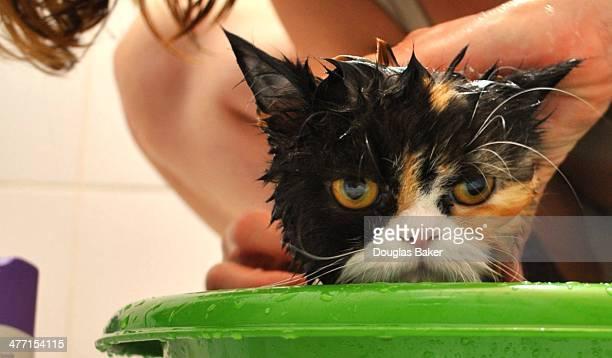 Pussy cat bath
