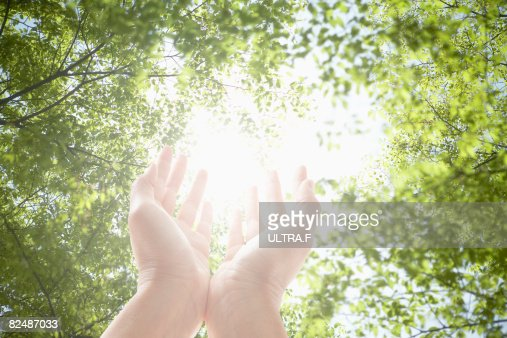 put the palms up towards the sunlight. : Stock Photo