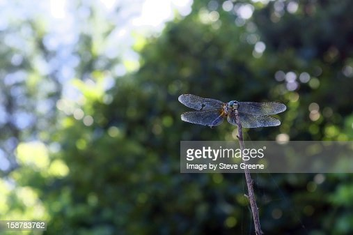 Puts the Dragon back into Fly : Stock Photo