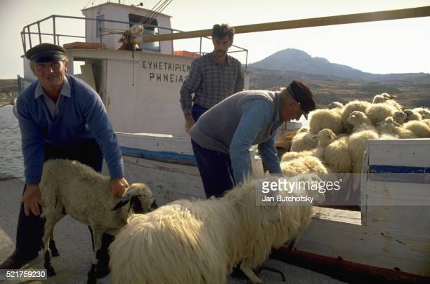 Putting Sheep on a Boat