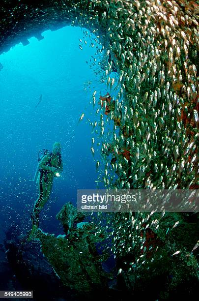 Pygmy sweeper and scuba diver Parapriacanthus ransonneti Egypt Red Sea Hurghada