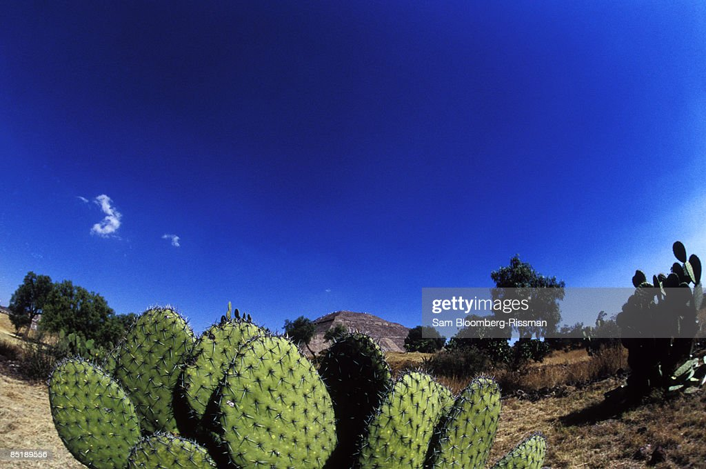 Pyramid of the Sun and cactus : Stock Photo