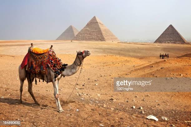 Pyramids and Camel