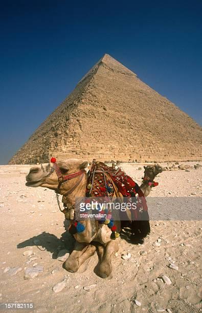 Pyramids Camels
