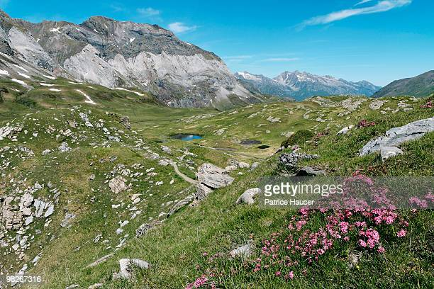 Pyrenees mountains and valley , Hautes-Pyrenees , France
