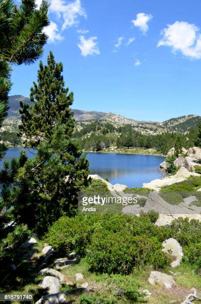 PyreneesOrientales department Hike around the Carlit ponds Trail starting at the artificial lake of Bouillouses Registered natural site situated in...