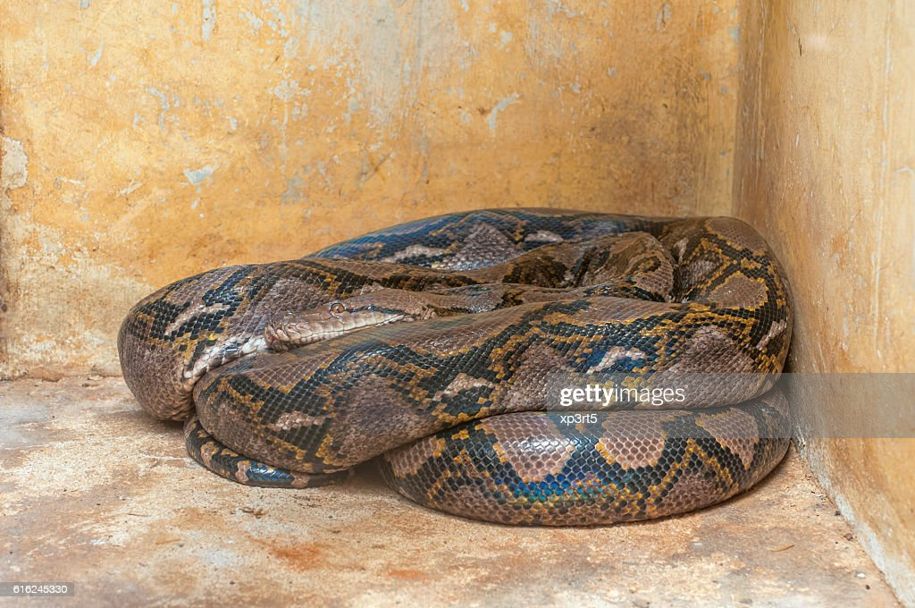 Python : Stock Photo