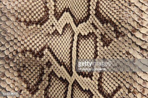 Python Skin : Stock Photo