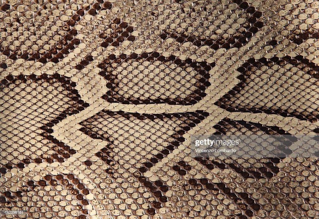 Python skin : Stock Photo