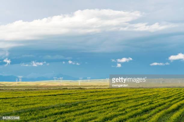 Qinghai natural scenery