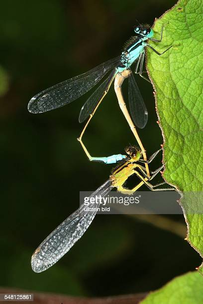 / 1 Quadratmeter Wiese Macroaufnahme Macroaufnahmen Makroaufnahme Insekt Insekten Krabbeltiere Libellenrad Libelle Linbellen Kleinlibelle...