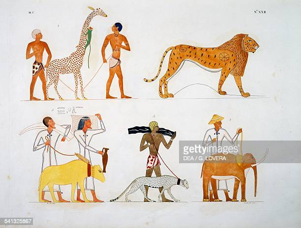 Quadruped animals brought as tributes by foreigners from the Tomb of Rekhmire Vizier of Egypt Plate XXII from The monuments of Egypt and Nubia civil...