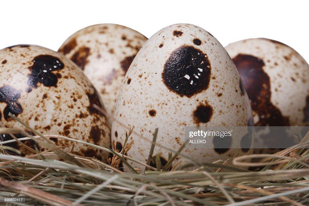 Quail eggs in a nest isolated on white macro. Horizontal : Stock Photo
