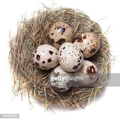 quail eggs in a nest macro. top view : Stock Photo