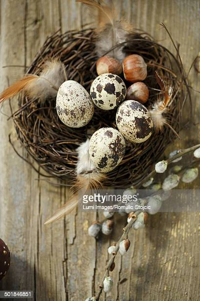 Quail Eggs In Easter Basket, Osijek, Croatia, Europe
