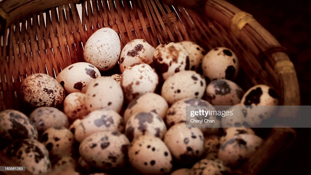 quail eggs : Stock Photo