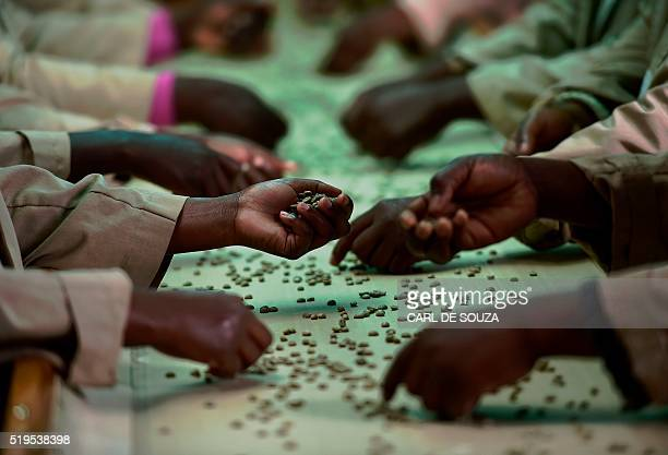 Quality control workers pick out unsuitable green unroasted coffee beans from a conveyor belt at Dormans coffee factory in Nairobi on April 6 2016...