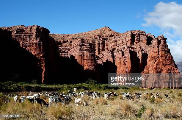 Quebrada de Cafayate Canyon, Salta Province