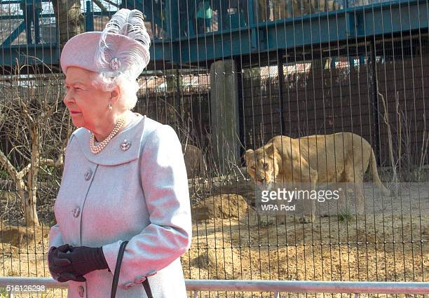 Queen Elizabeth II accompanied by Prince Philip Duke of Edinburgh officially opens the Land of the Lions exhibit at London Zoo on March 17 2016 in...