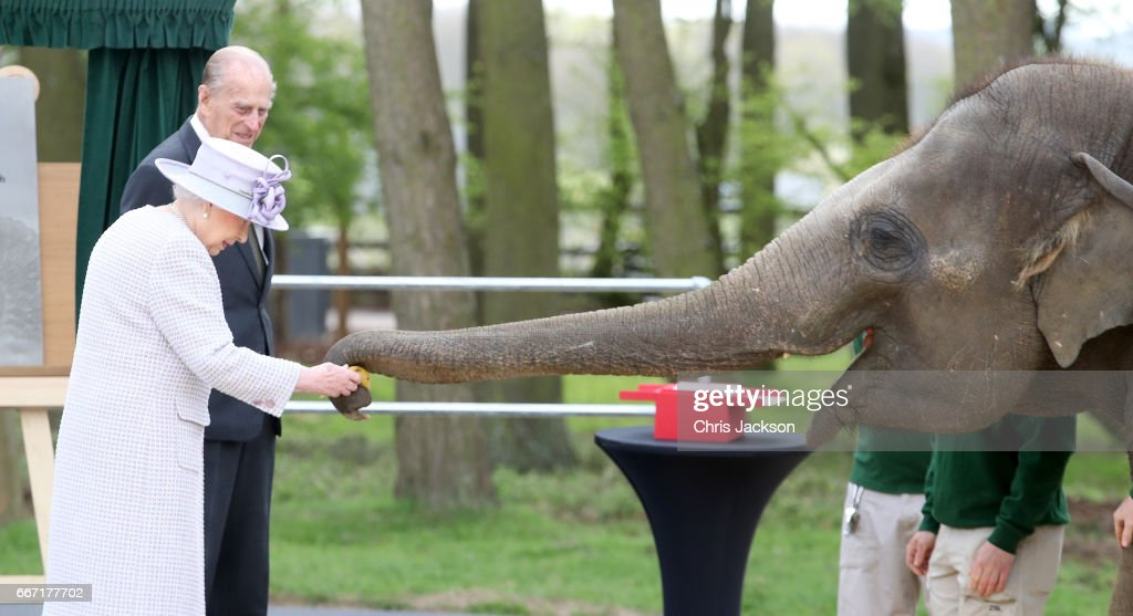 Queen Elizabeth II and Prince Philip, Duke of Edinburgh feed Donna the elephant as they visit the Elephant Centre at the ZSL Whipsnade Zoo on April 11, 2017 in Dunstable, United Kingdom. The Queen and The Duke will meet the Head Elephant Keeper and view the elephant team carrying out daily care tasks such as nail filing and mouth care. Her Majesty and His Royal Highness will meet the Centre's project team, including zookeepers and architects, in front of the elephant paddock before proceeding to the amphitheatre where The Queen will unveil a plaque to mark the formal opening of the Centre. The Queen and The Duke will view an elephant being fed and meet keepers and vets before departing.