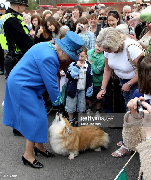 Queen Elizabeth II meets a corgi called Spencer as she arrives at Welshpool train station on April 28 2010 in Welshpool Wales The Queen and Duke of...