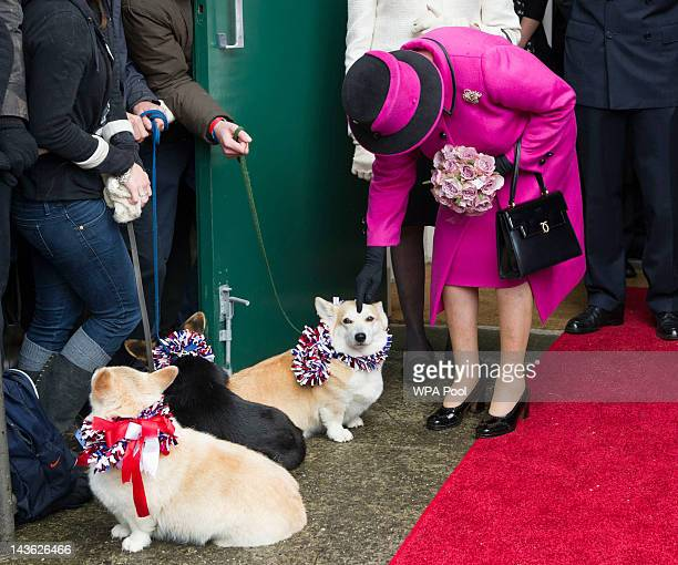 Queen Elizabeth II strokes a corgi during a visit to Sherborne Abbey on May 1 2012 in Sherborne England The Queen and Duke of Edinburgh are visiting...