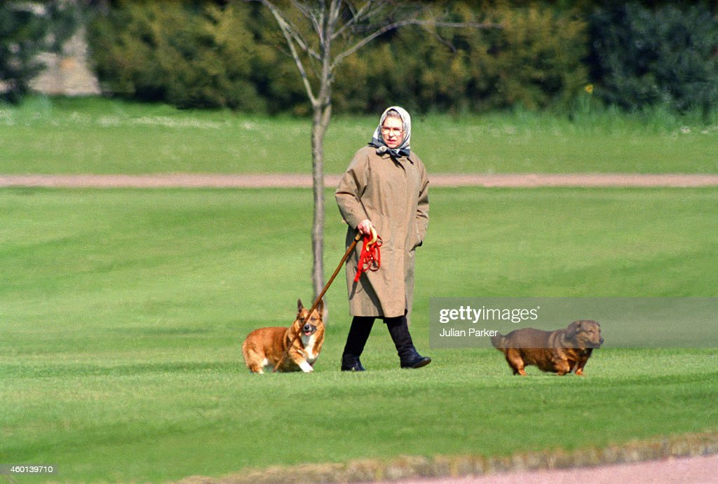Queen Elizabeth II walking her dogs at Windsor Castle on April 2 1994 in Windsor United Kingdom