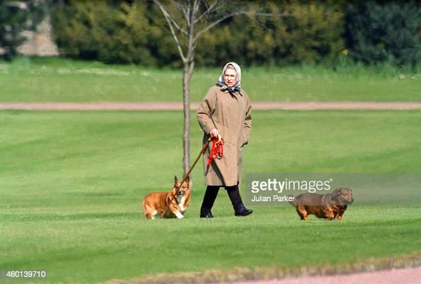 Queen Elizabeth II walking her dogs at Windsor Castle on April 2 1994 in Windsor United Kingdom
