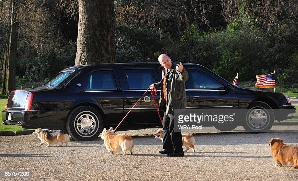 Queen Elizabeth II's Corgis are taken for a walk as they pass US President Barack Obama's car in the grounds of Buckingham Palace while he has an...